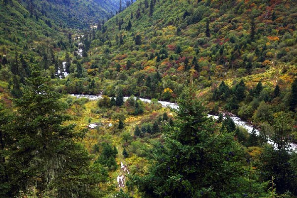 西藏这处不能随便进入的地方,是名副其实的绿色秘境