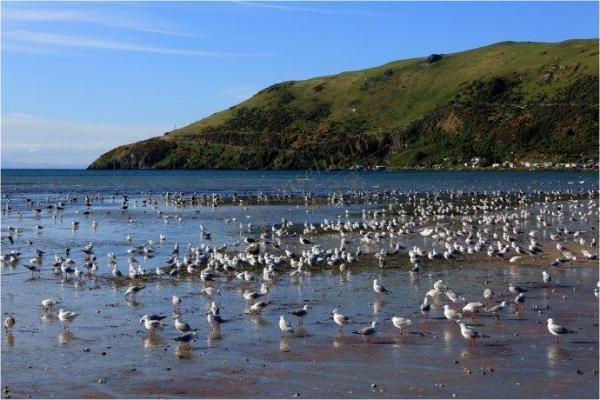 新西兰奥马鲁旅游景点,带你进入欧洲童话世界