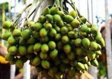 槟榔为海南当地百姓带来经济效益