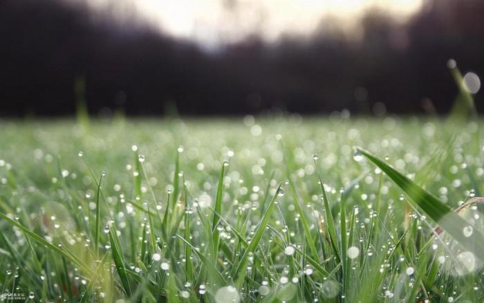 燕之屋鲜炖燕窝|春天在家滋补,提升你的免疫力