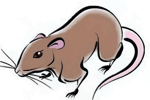 1972年属鼠人2021年运势男女 72年出生50岁生肖鼠今年运气如何
