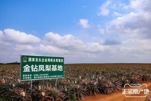 天猫正宗原产地携手文昌政府联合战疫,助销超30万斤文昌凤梨