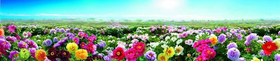 花欲开,等你来!第29届菏泽国际牡丹文化旅游节10日开幕