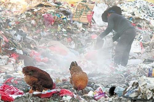 郑州唷货农场拾林间土鸡蛋取得无重金属、兽药残留的检测报告