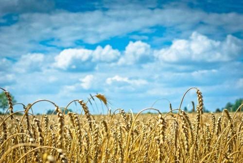 国际新闻联盟农业频道打造中国农业品牌影响力