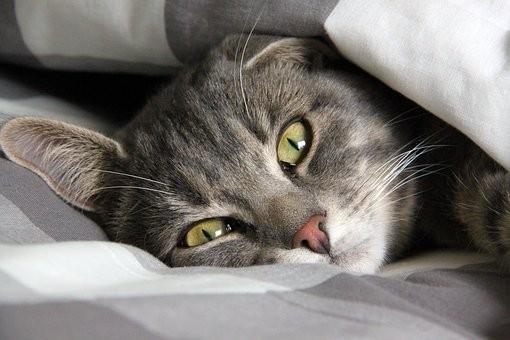 宠物也要打疫苗?猫咪疫苗难题一次说清!