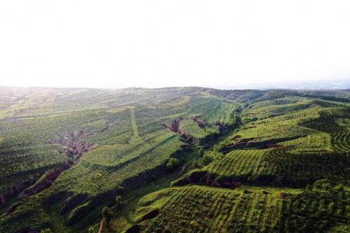 """""""绿色未来,你我共创""""Honda在华关联企业联合植树13年,万亩荒漠添新绿图3"""
