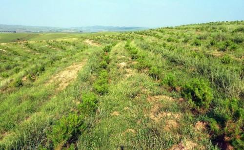 """""""绿色未来,你我共创""""Honda在华关联企业联合植树13年,万亩荒漠添新绿图1"""