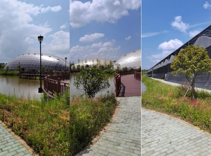 投资数亿元杞妃果产业园开建,打造新一代智慧农业产业园