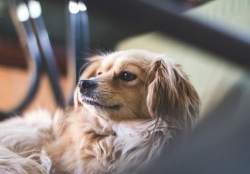 波奇网IPO:2020宠物行业的强心针