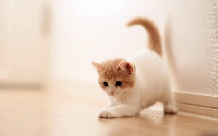 宠物驱虫药对比:大宠爱和博来恩哪个好?