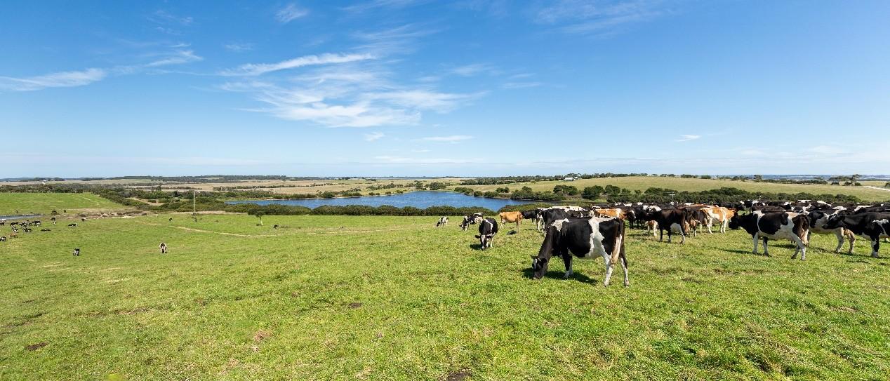 蒙牛以实际行动积极构建乳业双循环,深化全球乳业共同体
