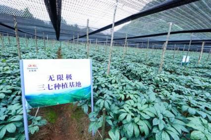 无限极中国有限公司 道地原料溯源,向消费者展示品控决心