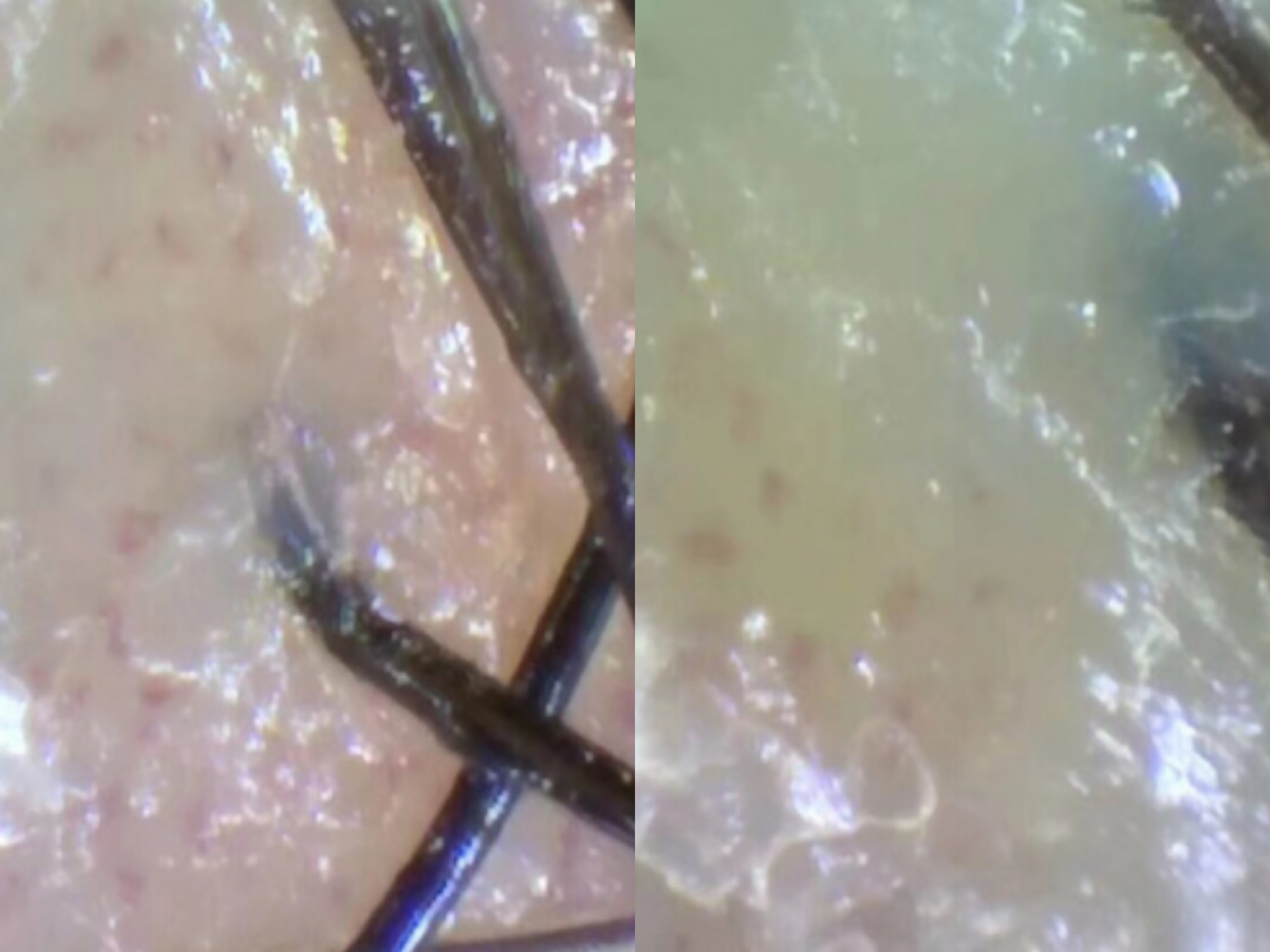 无硅油洗发水控油效果差,阳离子调理剂是原罪!