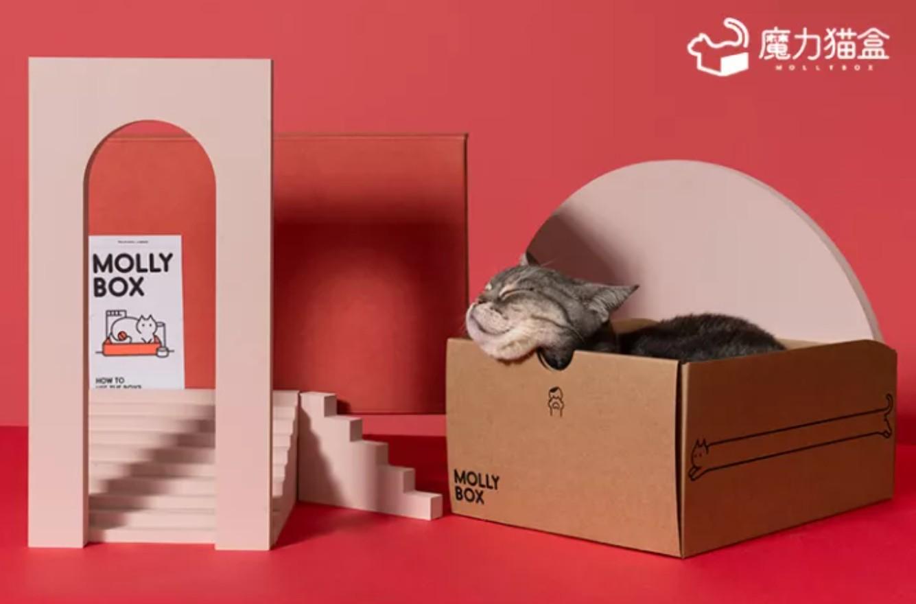 遇见魔力猫盒,遇见更有趣的轻宠潮时代