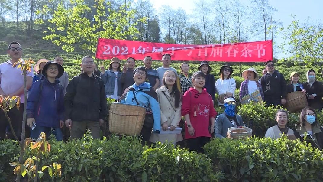从云端到茶山,凤宁号与全国茶友共采春茶