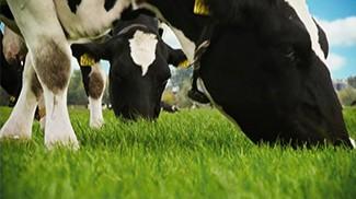 澳滋奶粉好奶源,呵護每一位寶寶成長!