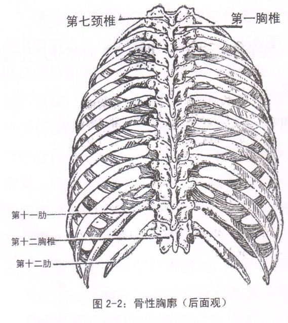 破译胸椎健康密码――胸源性胃脘痛――记脊柱健康的先行者蒋学超