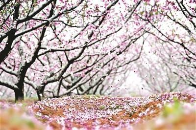 相约4月踏青季,5条精品线路带你畅游大美京郊