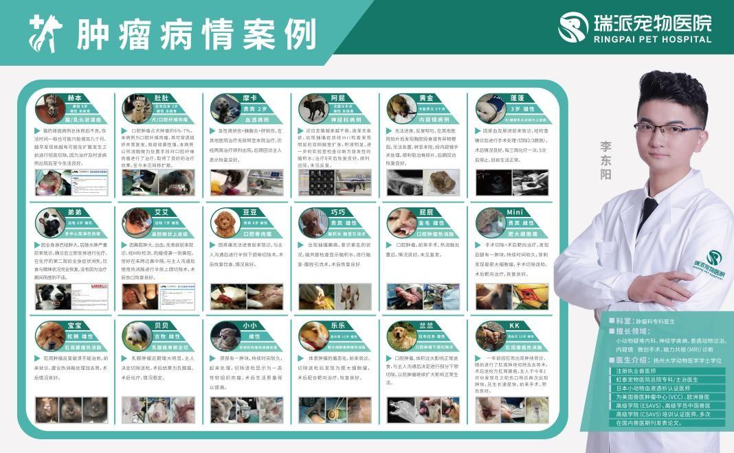 宠物看病医疗的高端-杭州瑞派·虹泰