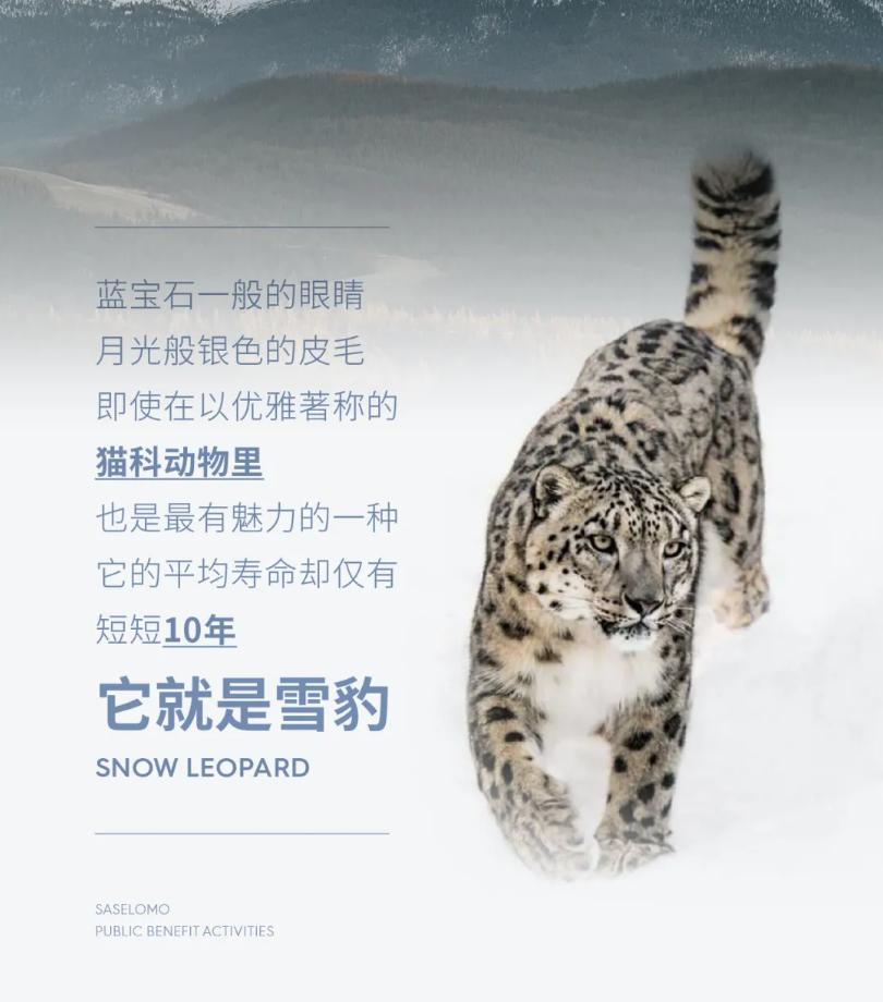 深入雪豹栖息地,三草两木招募志愿者共同守护地球好气色
