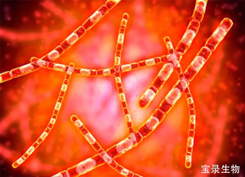 怎么杀灭炭疽杆菌?